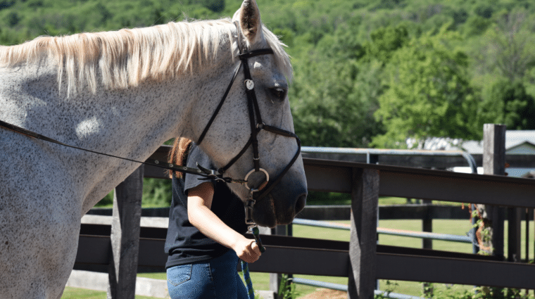 White equine therapy horse from the Wheatley Farms & Arts Center pilot day habilitation program